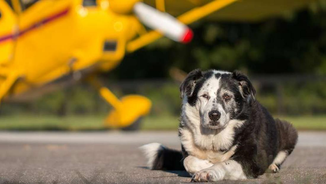 Rachael Ray Foundations Generous Life Saving Donation To Pittsburgh Aviation Animal Rescue Team Helps Buy New Plane
