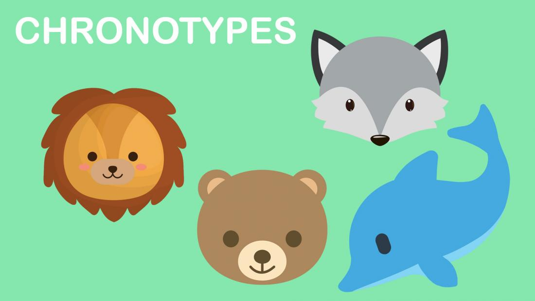 chronotypes illustration