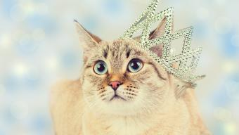 Cat Wearing Crown