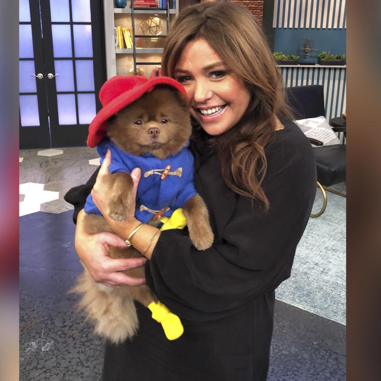 paddington bear dog with rachael ray