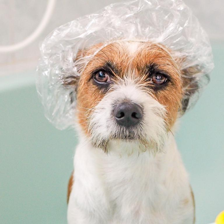 dog in shower cap