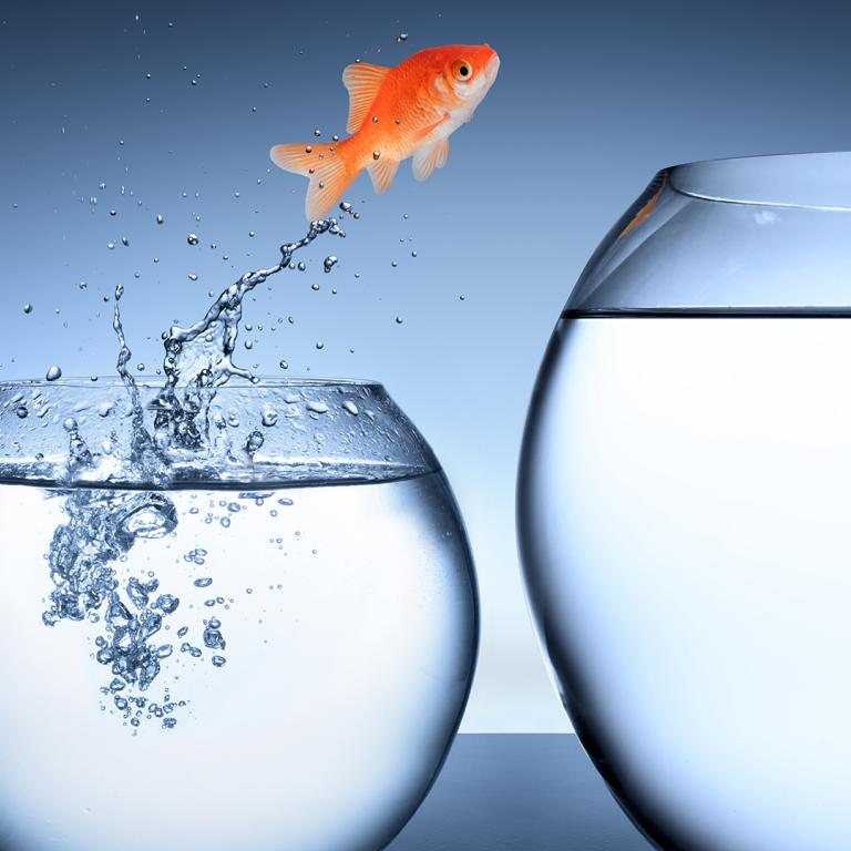 goldfish jumping out of its bowl toward a bigger bowl