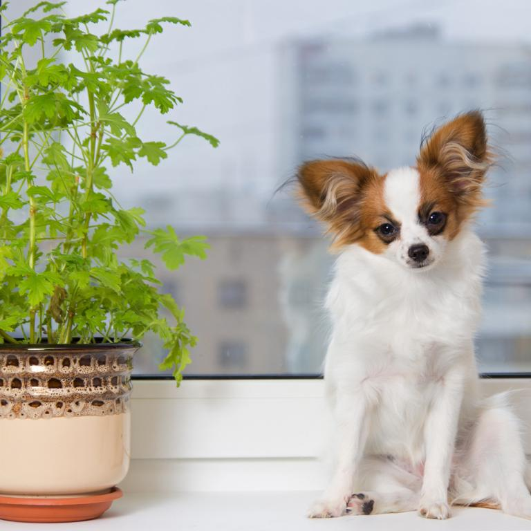 dog with plant