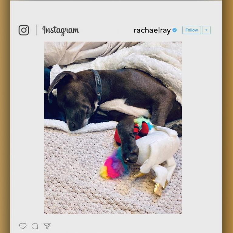 Bella with Deadpool toy from Rachael's Instagram