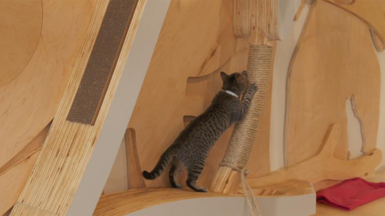 cat at scratching post