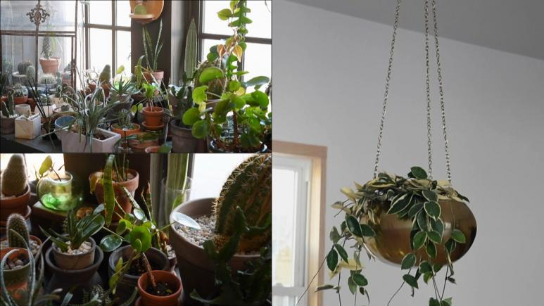 cacti and hanging plant split