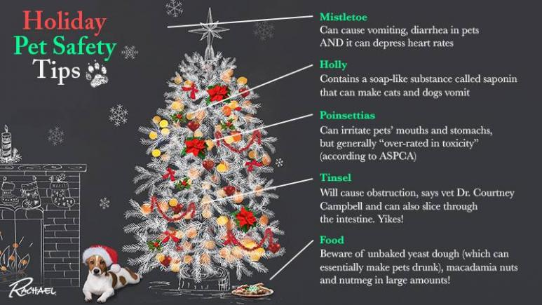 rachael ray show - Are Christmas Trees Poisonous To Cats