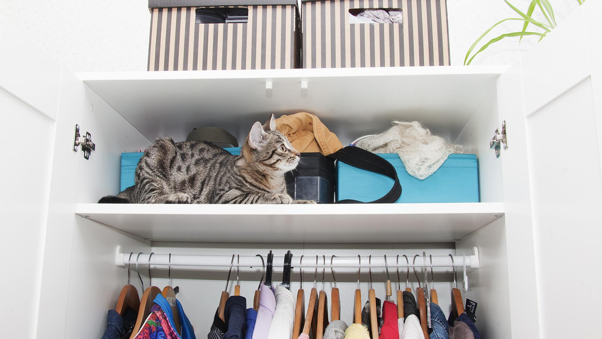 The Best Tips For Organizing Every Single Closet In Your House