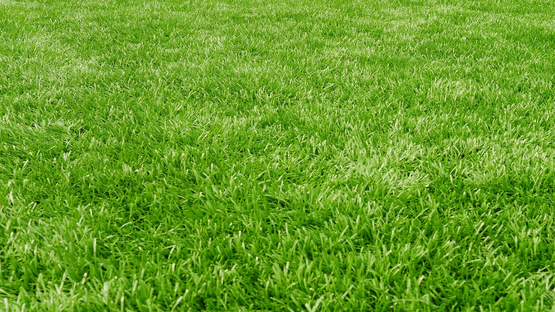 5 Tips For Taking Care Of Your Lawn Rachael Ray Show